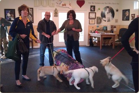 Puppy class held in the climate controlled indoor training studio